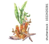 watercolor coral reef... | Shutterstock . vector #1022420281