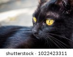 face of cute black cat with...   Shutterstock . vector #1022423311