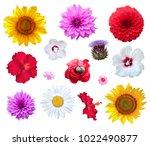Stock photo flowers set isolated on white background 1022490877
