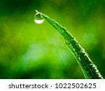 water drop on green plant.... | Shutterstock . vector #1022502625