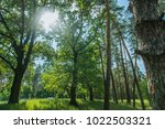 forest. green tree in the wood. ... | Shutterstock . vector #1022503321