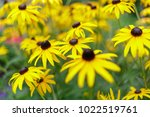 plants photography by procolour ... | Shutterstock . vector #1022519761