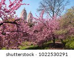 cherry blossoms in central park ... | Shutterstock . vector #1022530291