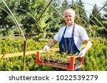 farmer holding crate of plants...   Shutterstock . vector #1022539279