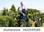 gardener trimming coniferous...   Shutterstock . vector #1022539285
