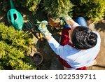 woman gardener transplanting...   Shutterstock . vector #1022539711