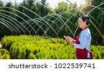 senior woman gardener or seller ...   Shutterstock . vector #1022539741