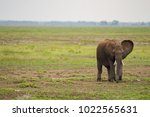 huge elephant isolated on the... | Shutterstock . vector #1022565631