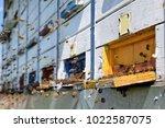big swarm of bees in front of... | Shutterstock . vector #1022587075