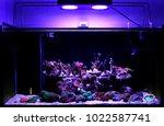display saltwater coral reef... | Shutterstock . vector #1022587741