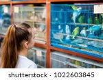 little girl looking at birds in ... | Shutterstock . vector #1022603845