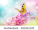 Butterfly On Colorful Flower...