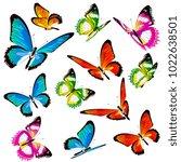 beautiful color butterflies set ...   Shutterstock .eps vector #1022638501