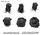 rose vector set by hand drawing.... | Shutterstock .eps vector #1022663299