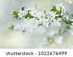 spring tree blossom    Shutterstock . vector #1022676499