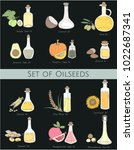 illustration of different kinds ... | Shutterstock . vector #1022687341