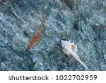 shells on gray stone  the sea... | Shutterstock . vector #1022702959