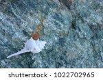 shells on gray stone  the sea... | Shutterstock . vector #1022702965