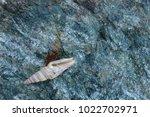 shells on gray stone  the sea... | Shutterstock . vector #1022702971