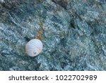 shells on gray stone  the sea... | Shutterstock . vector #1022702989