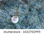shells on gray stone  the sea... | Shutterstock . vector #1022702995