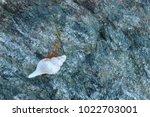 shells on gray stone  the sea... | Shutterstock . vector #1022703001