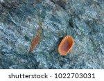 shells on gray stone  the sea... | Shutterstock . vector #1022703031