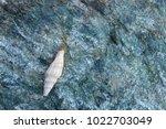 shells on gray stone  the sea... | Shutterstock . vector #1022703049