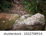 small lizard sunning himself on ... | Shutterstock . vector #1022708914