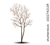 tree rowan and berries without...   Shutterstock .eps vector #1022742139