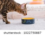 Healthy Pet Diet. Quality Food...