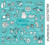 set drawings of vegetables for... | Shutterstock .eps vector #1022760784
