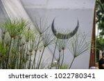 green  dainty plants outdoors... | Shutterstock . vector #1022780341