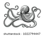 Stock vector octopus hand drawing vintage engraving illustration on white backgroud 1022794447