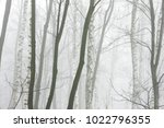 winter forest in thick fog | Shutterstock . vector #1022796355