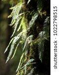 flora in bhutan. | Shutterstock . vector #1022798515