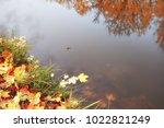 pond in an autumn park  ... | Shutterstock . vector #1022821249
