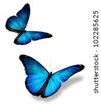 Two Blue Butterfly  Isolated O...