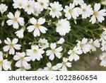 ornamental garden plants... | Shutterstock . vector #1022860654