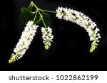 white flowers on black... | Shutterstock . vector #1022862199