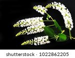 white flowers on black... | Shutterstock . vector #1022862205