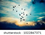 silhouette of birds flying into ... | Shutterstock . vector #1022867371