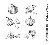 herbs and spices sketch ink... | Shutterstock . vector #1022869639
