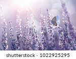 surprisingly beautiful ... | Shutterstock . vector #1022925295