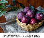 Plum. Fresh Plum. Harvest....