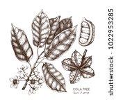 vector cola tree vintage sketch....   Shutterstock .eps vector #1022953285