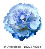 watercolor  flower peony  white ... | Shutterstock . vector #1022975395