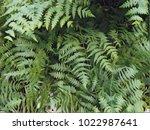 Green Fern Leaf Digital...