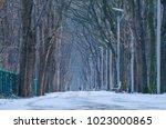 city park   a park alley... | Shutterstock . vector #1023000865