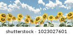 sunflowers against a blue sky... | Shutterstock . vector #1023027601